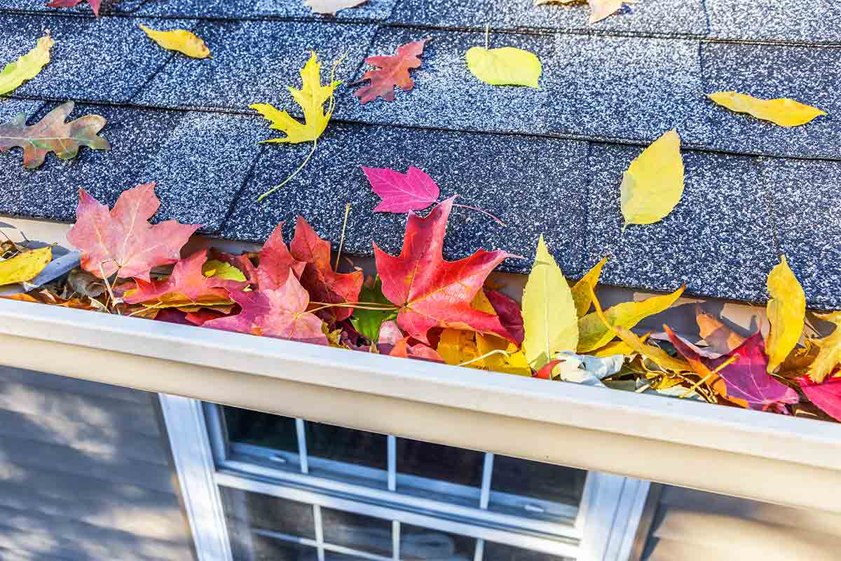 asphalt shingle roof with gutters full of leaves