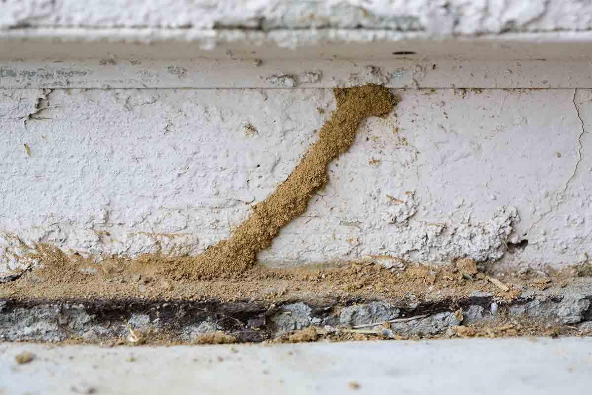 Close-up image of termite mud tubes