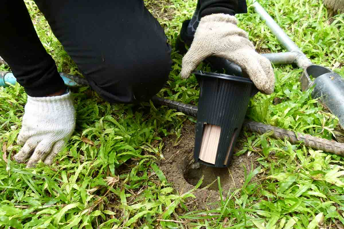 Termite professional checking a termite bait system