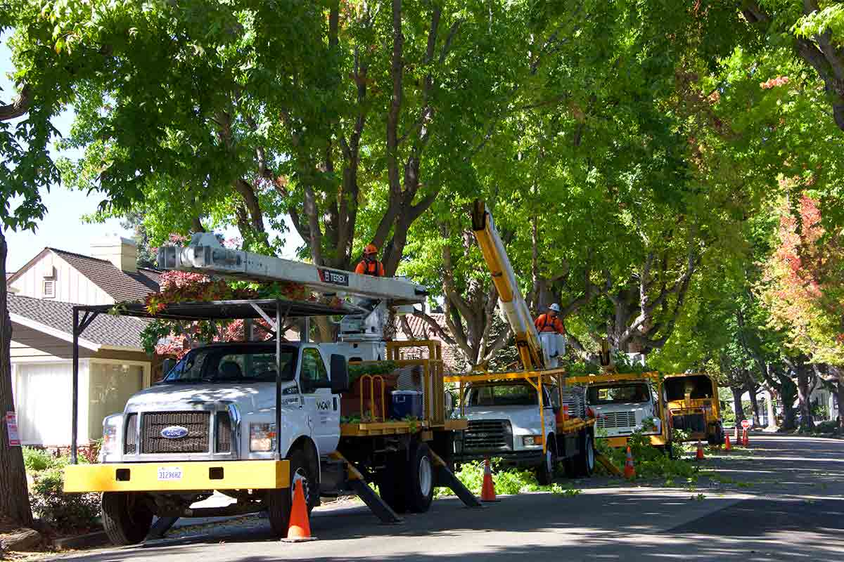 Tree service work vehicles lined up on side of road