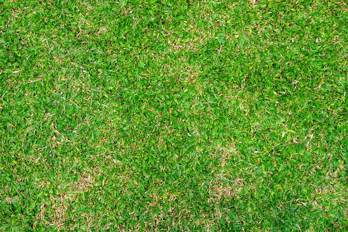 Close-up image of green Bermuda grass