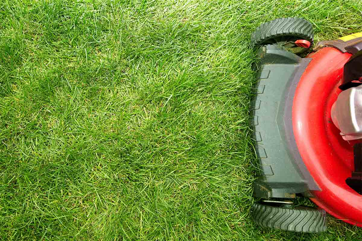 picture of red lawn mower on green grass