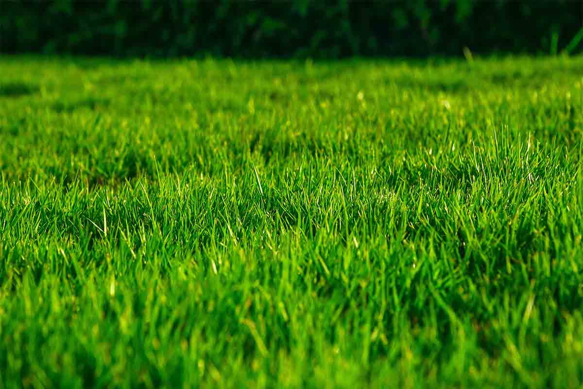 Close-up-image-of-green-grass-lawn