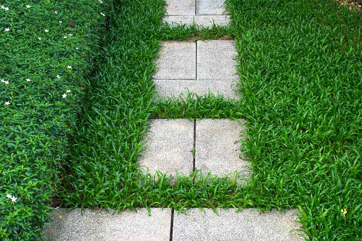 Grass-lawn-with-paver-pathway