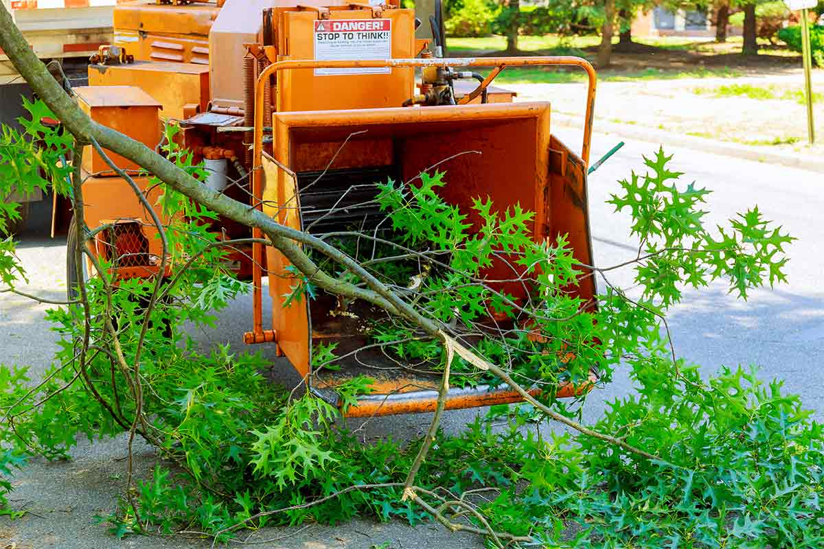 orange chipper with tree branches in foreground
