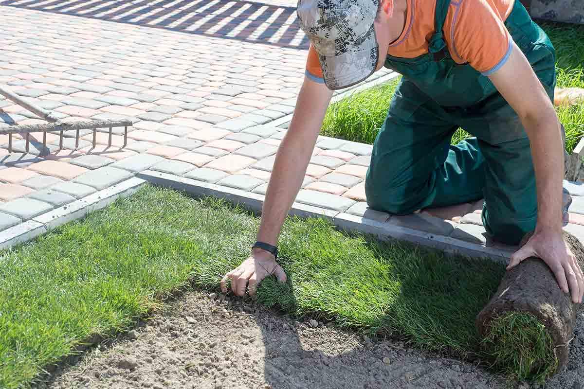 landscaper-installing-turf-grass-around-hardscape-path