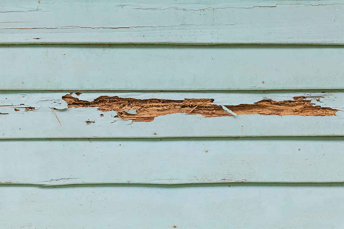 painted wood siding that has been damaged