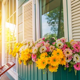 Shutters and Window Boxes