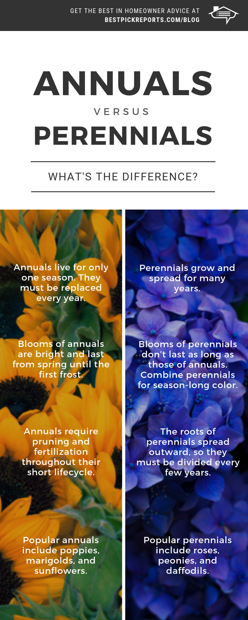 Difference between annuals and perennials infographic best pick difference between annuals and perrenials infographic izmirmasajfo