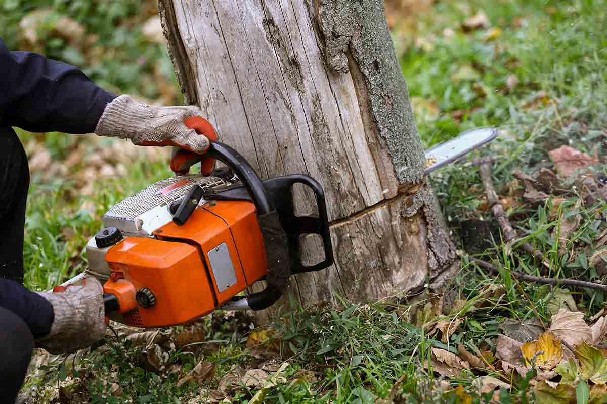 professional arborist cutting down tree with chain saw