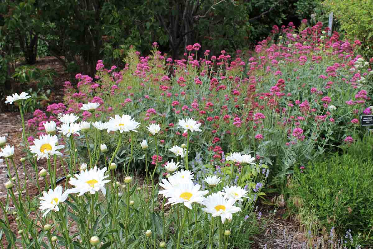 drought-resistant flowers and grasses