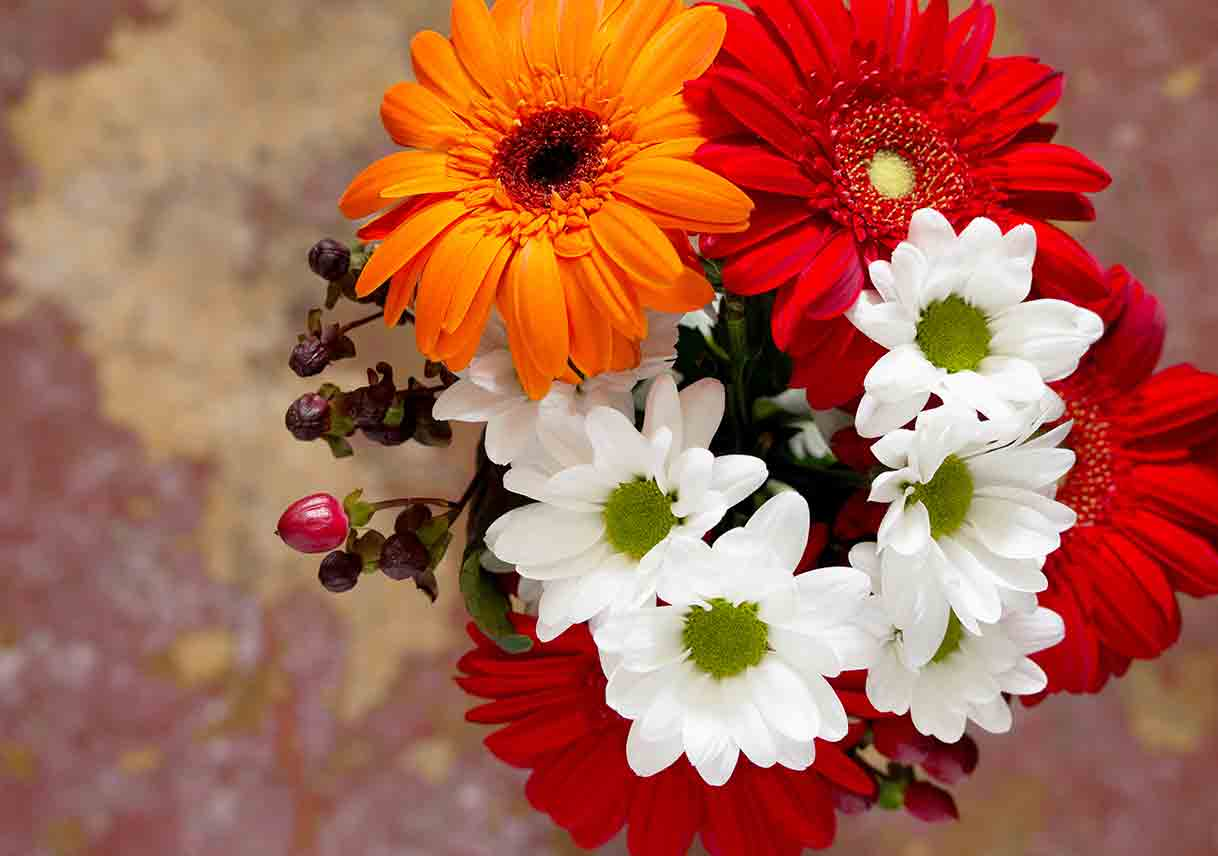 Bouquet of orange, red, and white Gerbera daisies