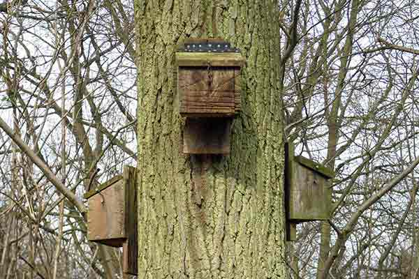 three bat boxes attached to a tree trunk