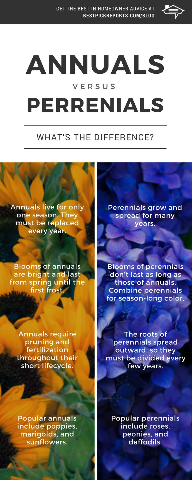 Difference Between Annuals And Perennials Infographic Best Pick