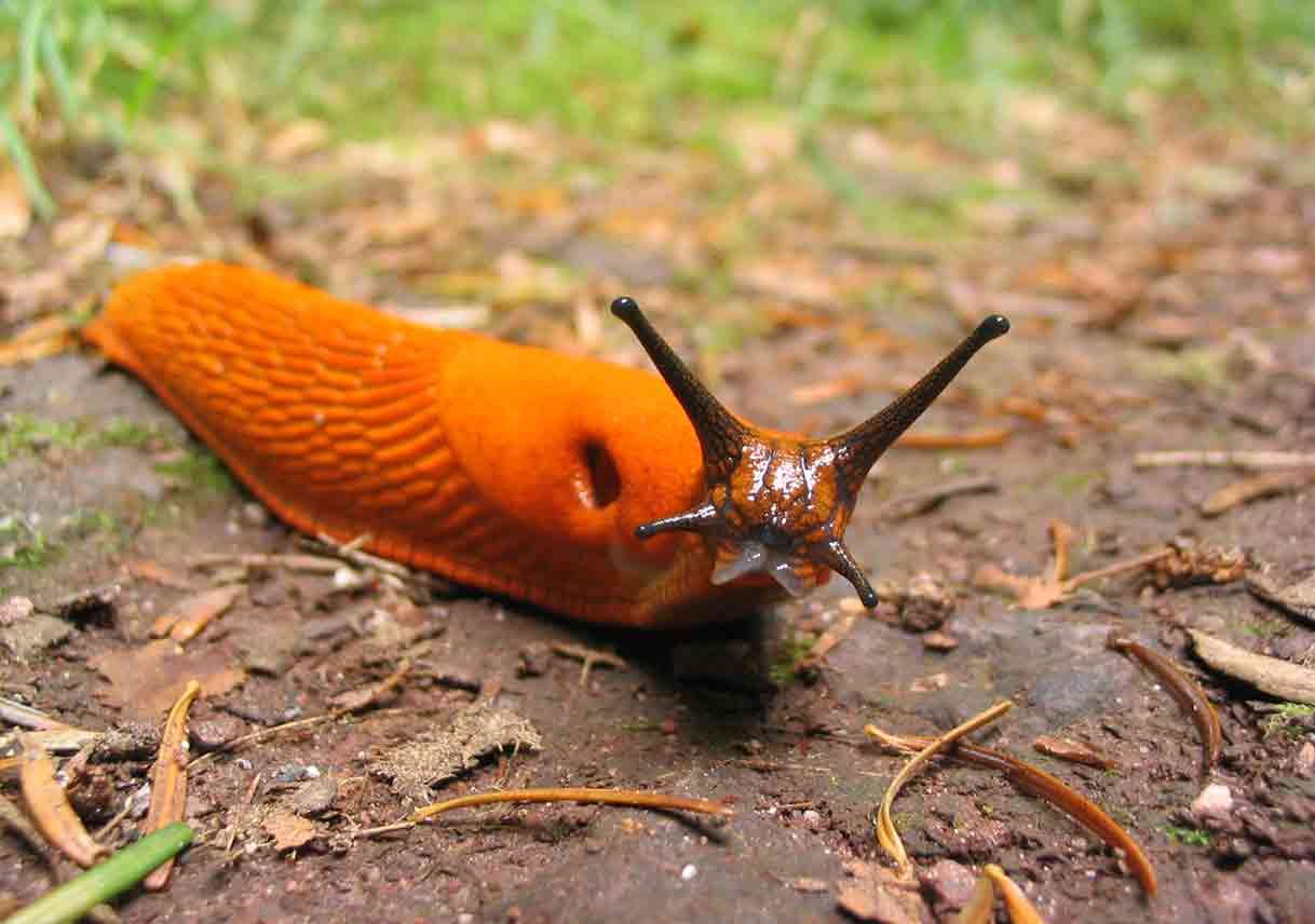 red slug on ground