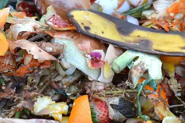 close-up of composted fruit and vegetables