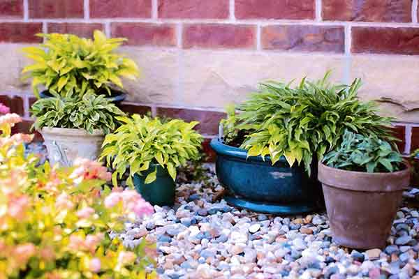 potted plants against a brick wall