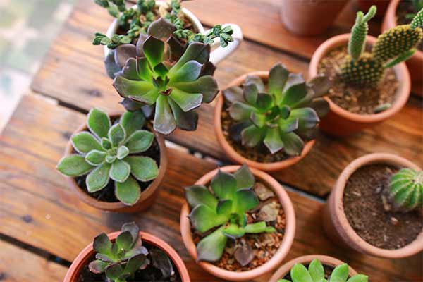 variety of potted succulents on wooden table