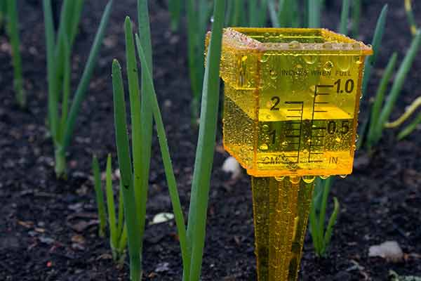 yellow plastic rain gauge in garden