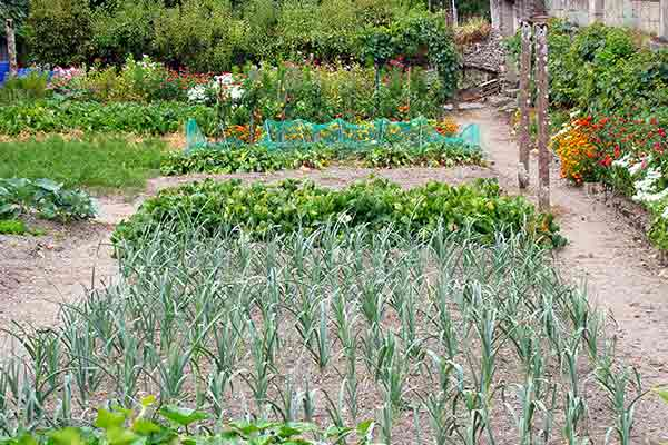neatly designed vegetable garden