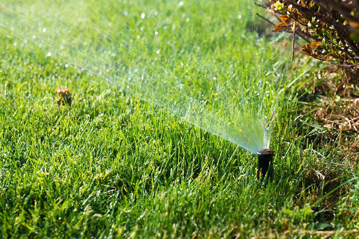 sprinkler head spraying water at the edge of a planting bed