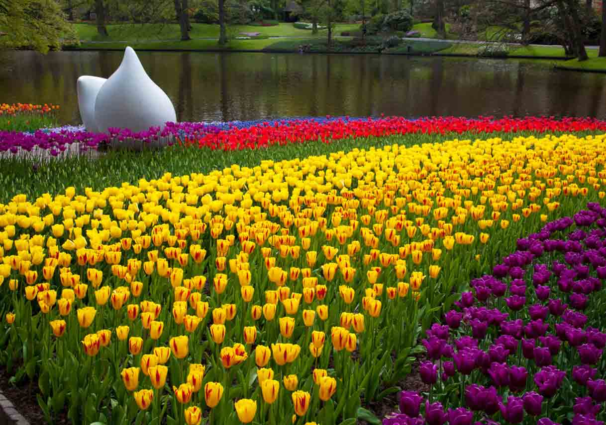 tulips and a white sculpture