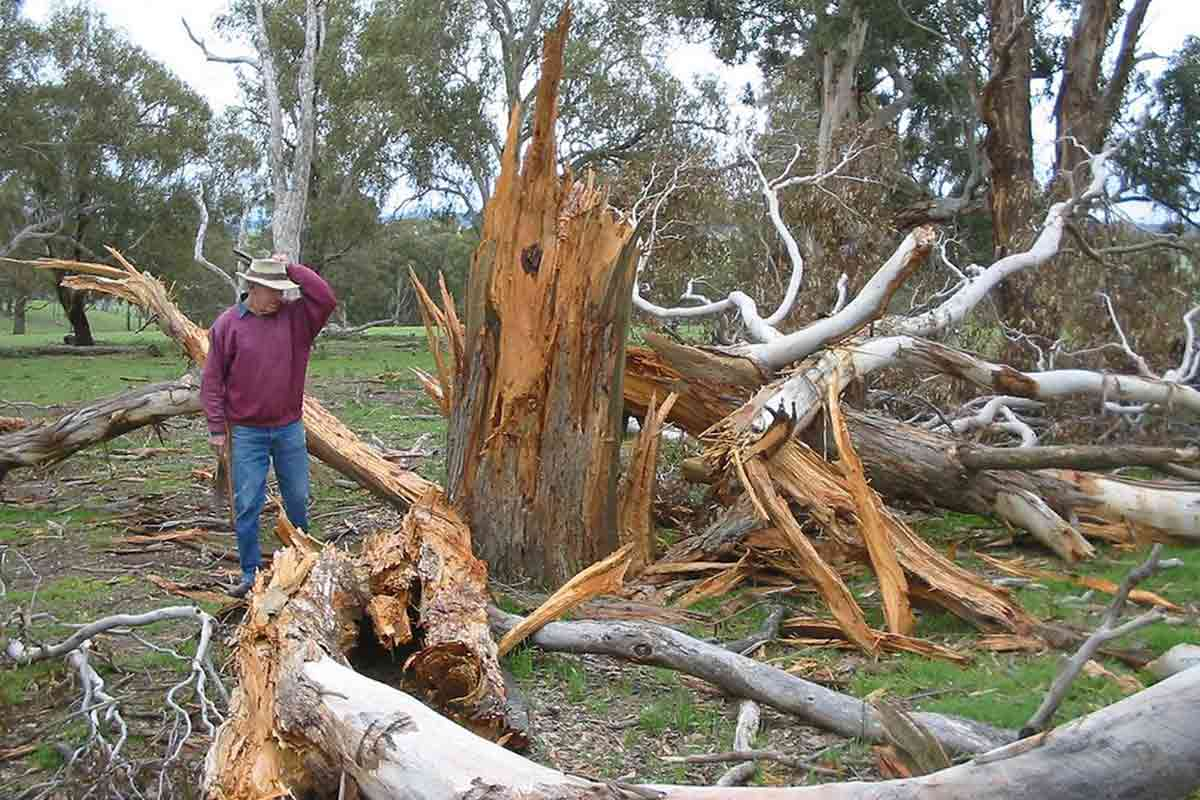 man next to lightning-damaged tree