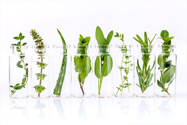 isolated jars holding different herbs