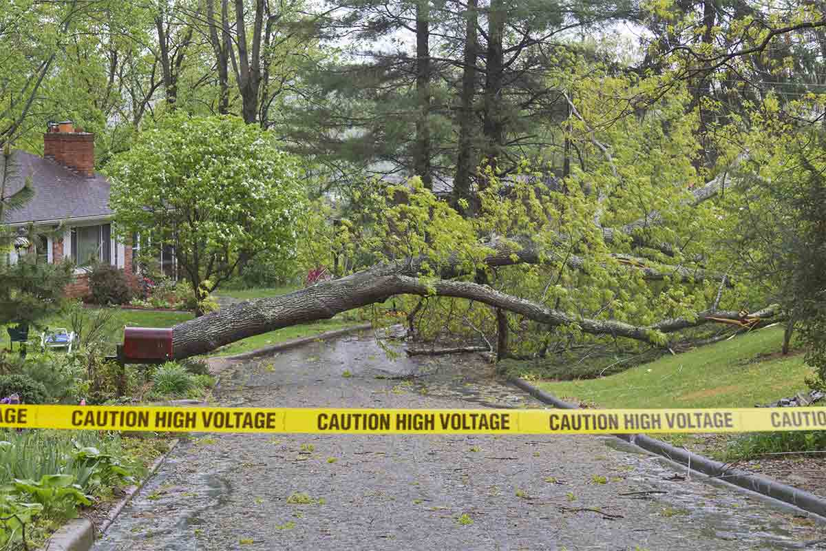 tree fallen in neighborhood sectioned off with caution tape