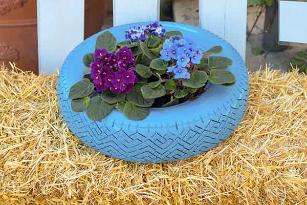 flowers in a painted blue tire sitting on hay