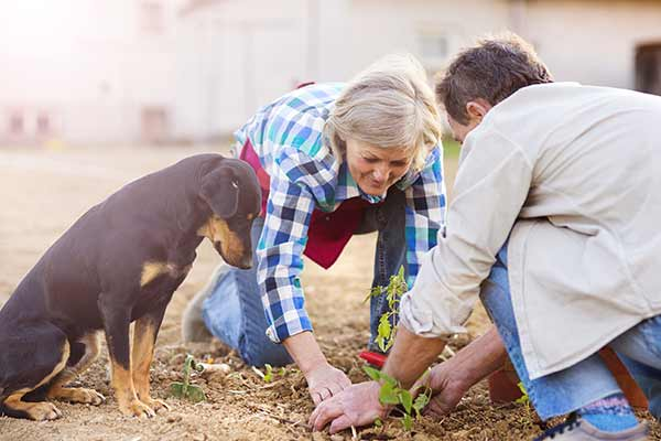 senior couple and dog planting seedlings