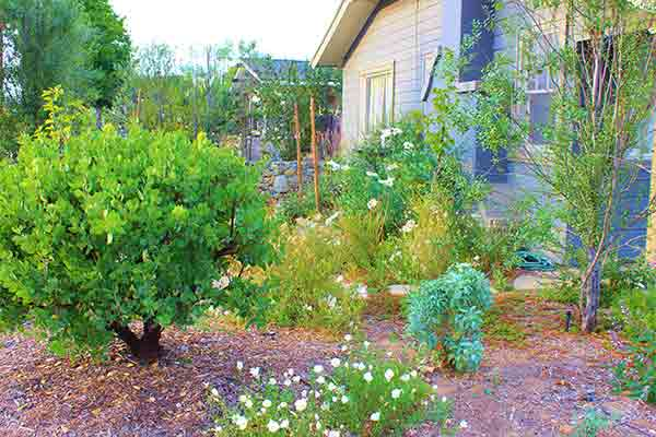 backyard with native plants