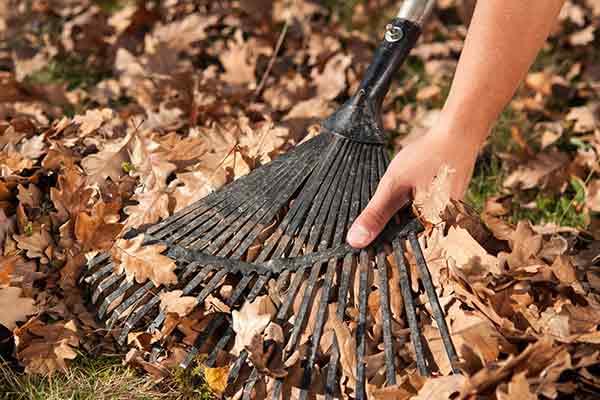 hand pulling dead leaves off rake