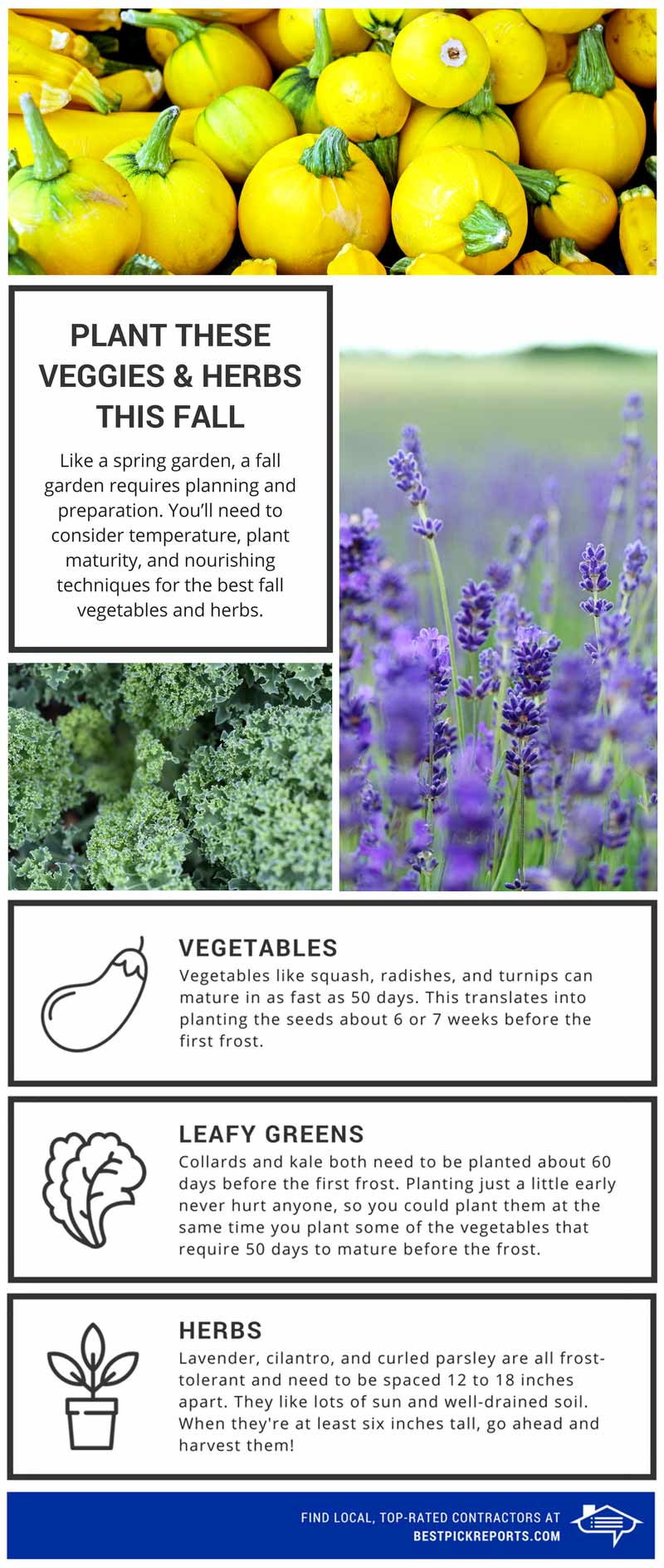 Planting fall veggies and herbs infographic
