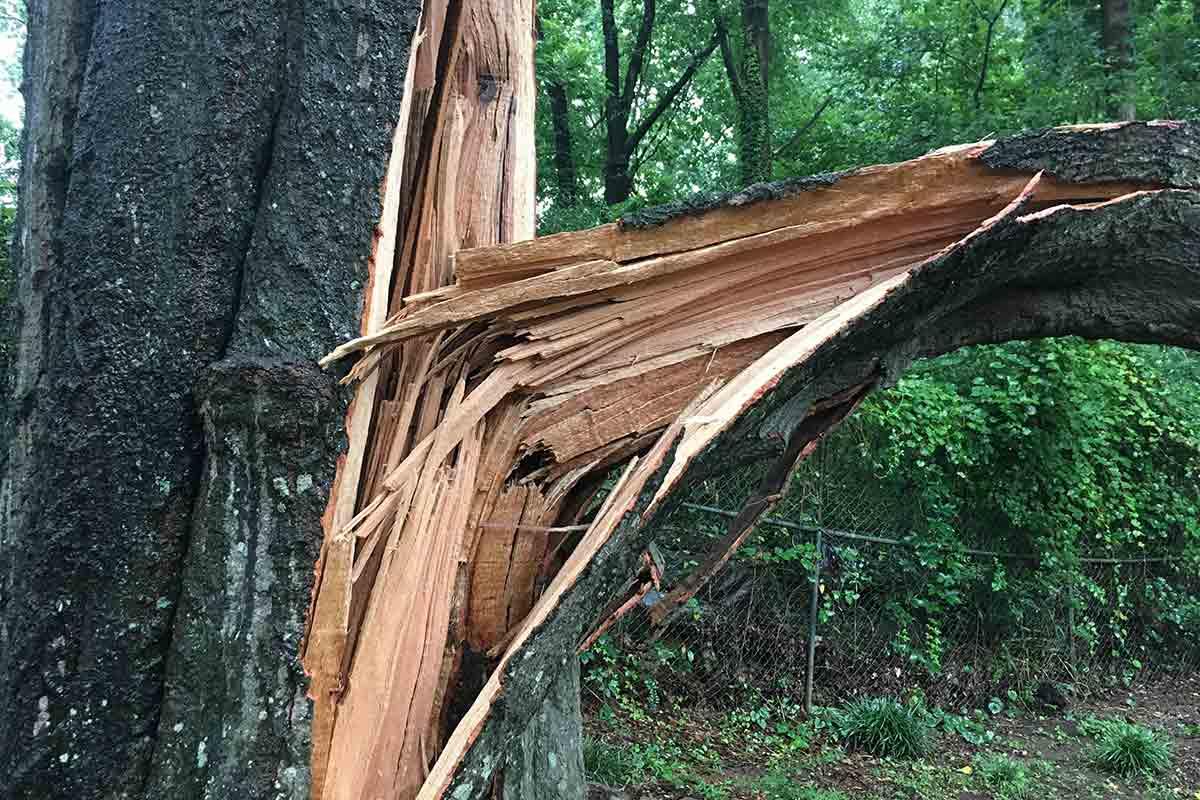 close-up of broken tree limb