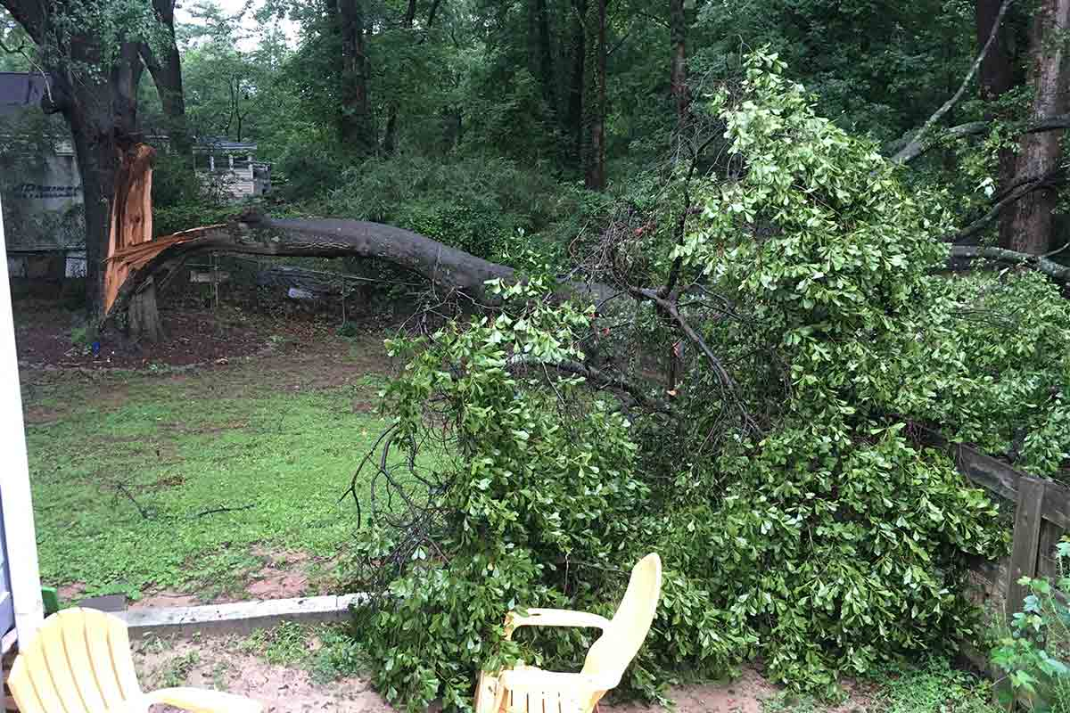 fallen tree limb in a backyard