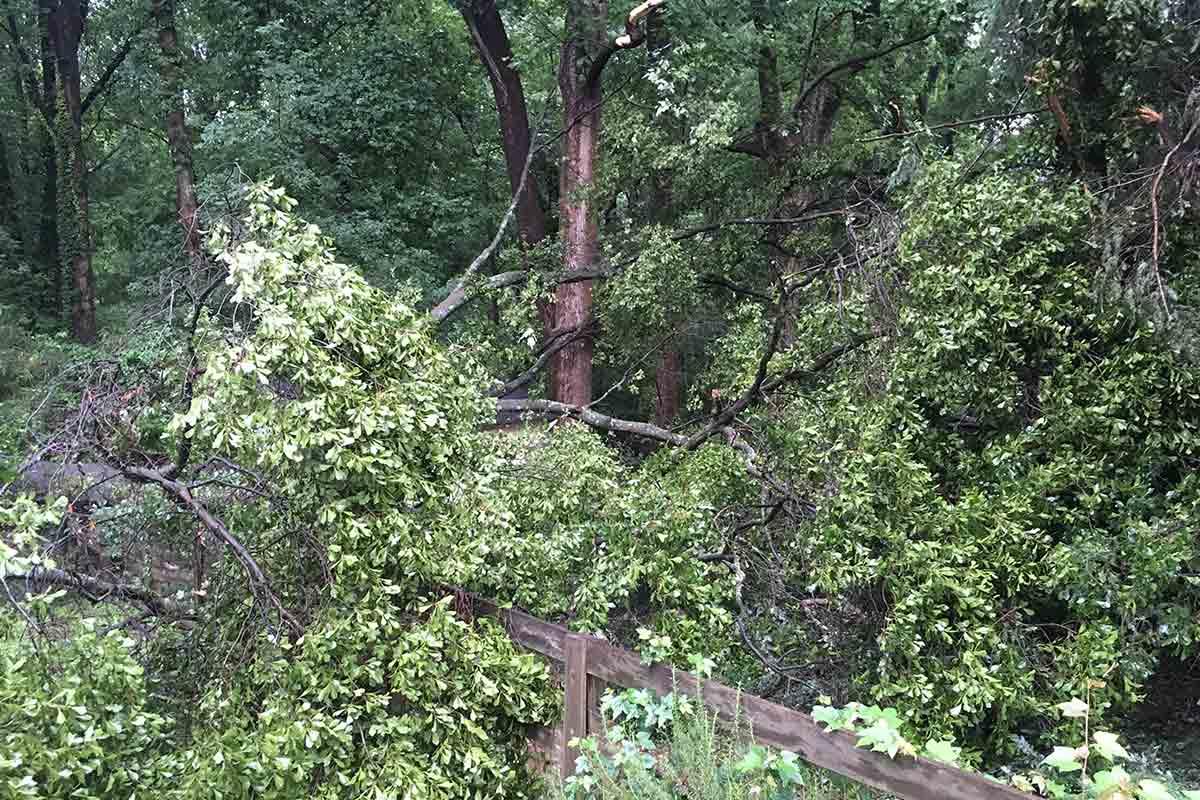 fallen tree limb on a fence
