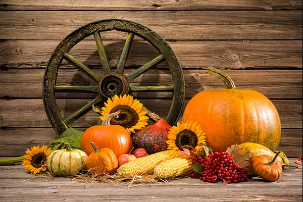 decorative pumpkins, flowers, corn, and berries