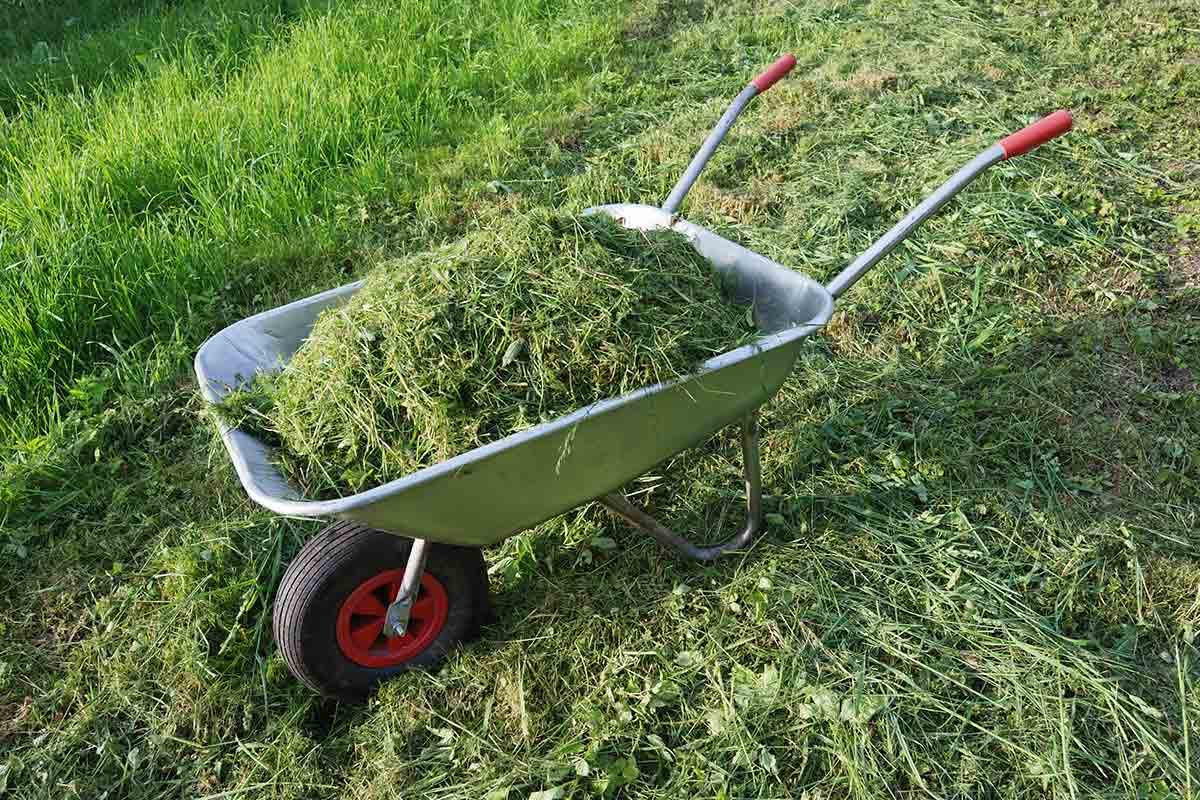 wheelbarrow filled with grass clippings