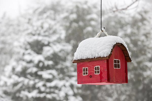 snow-covered birdhouse hanging from tree
