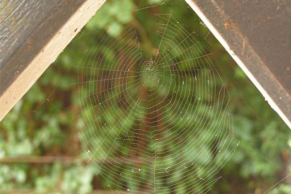 spider web between wooden beams