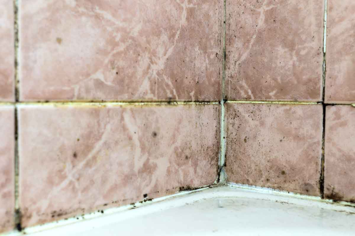 black mold fungus growing in damp, poorly ventilated bath areas