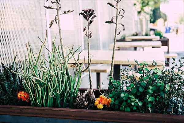 plant box on table outdoors