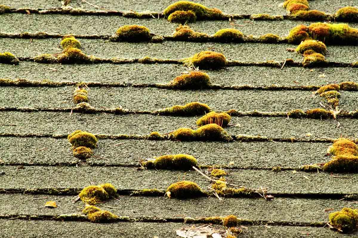 old mossy asphalt roof
