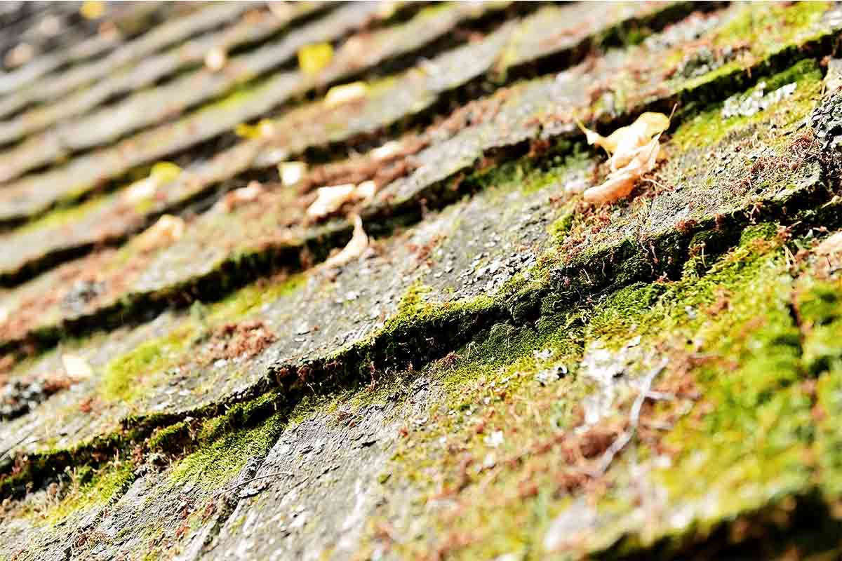 old wooden roof with moss