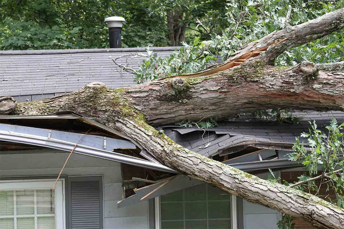 roof crushed by tree during storm