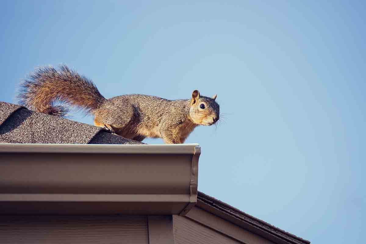 squirrel on rooftop