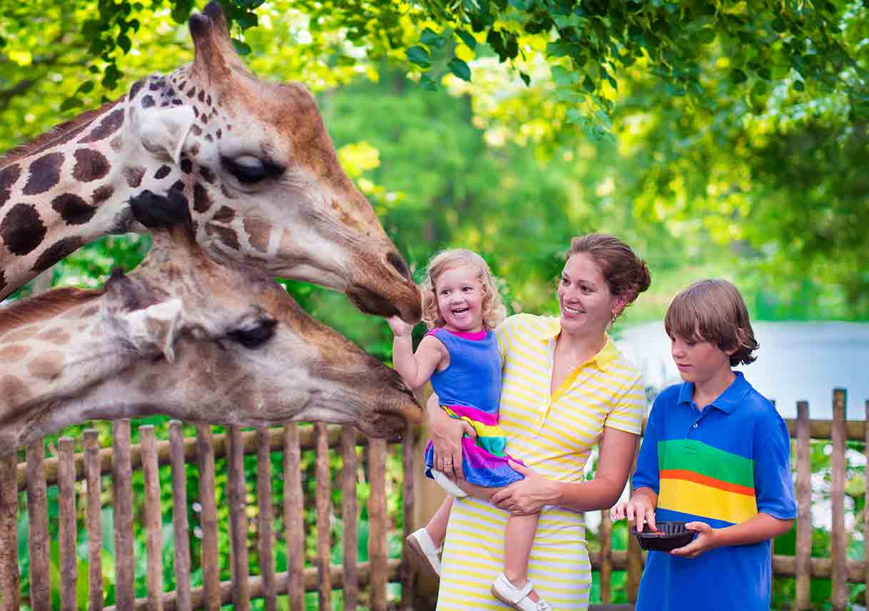family with a giraffe at a zoo