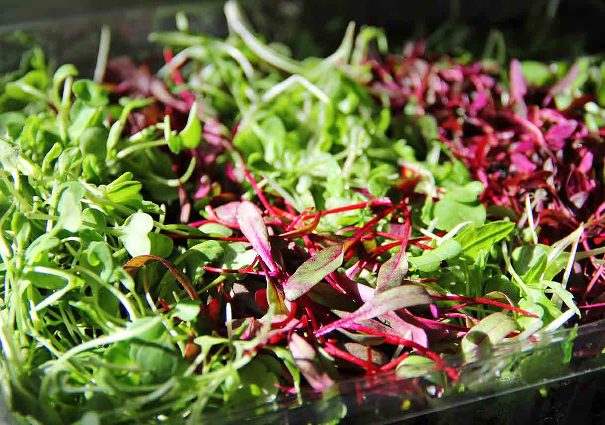 closeup photo of colorful microgreens