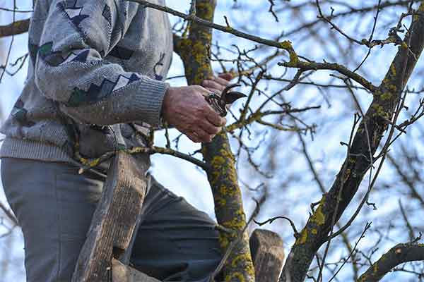 close-up of man on ladder pruning a tree